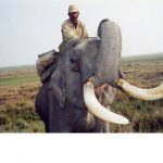 India: Kaziranga's Wild Kingdom