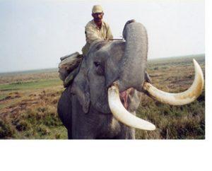 Kaziranga National Park elephant
