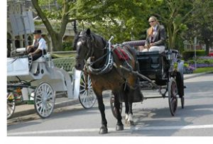 niagara parkway horse drawn carriages