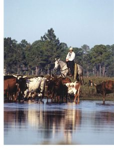florida cow camp