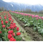 Fields of Dreams in the Fraser Valley