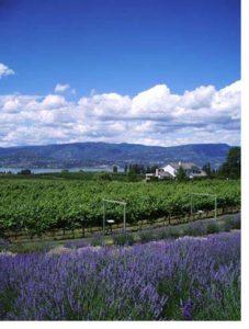 lavendar farm okanagan bc