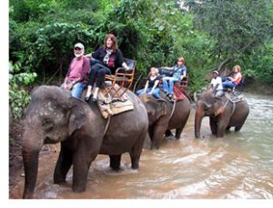 thailand elephant ride