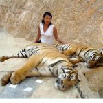Meeting With Tigers in Thailand