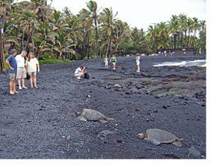 turtles on hawaii big island